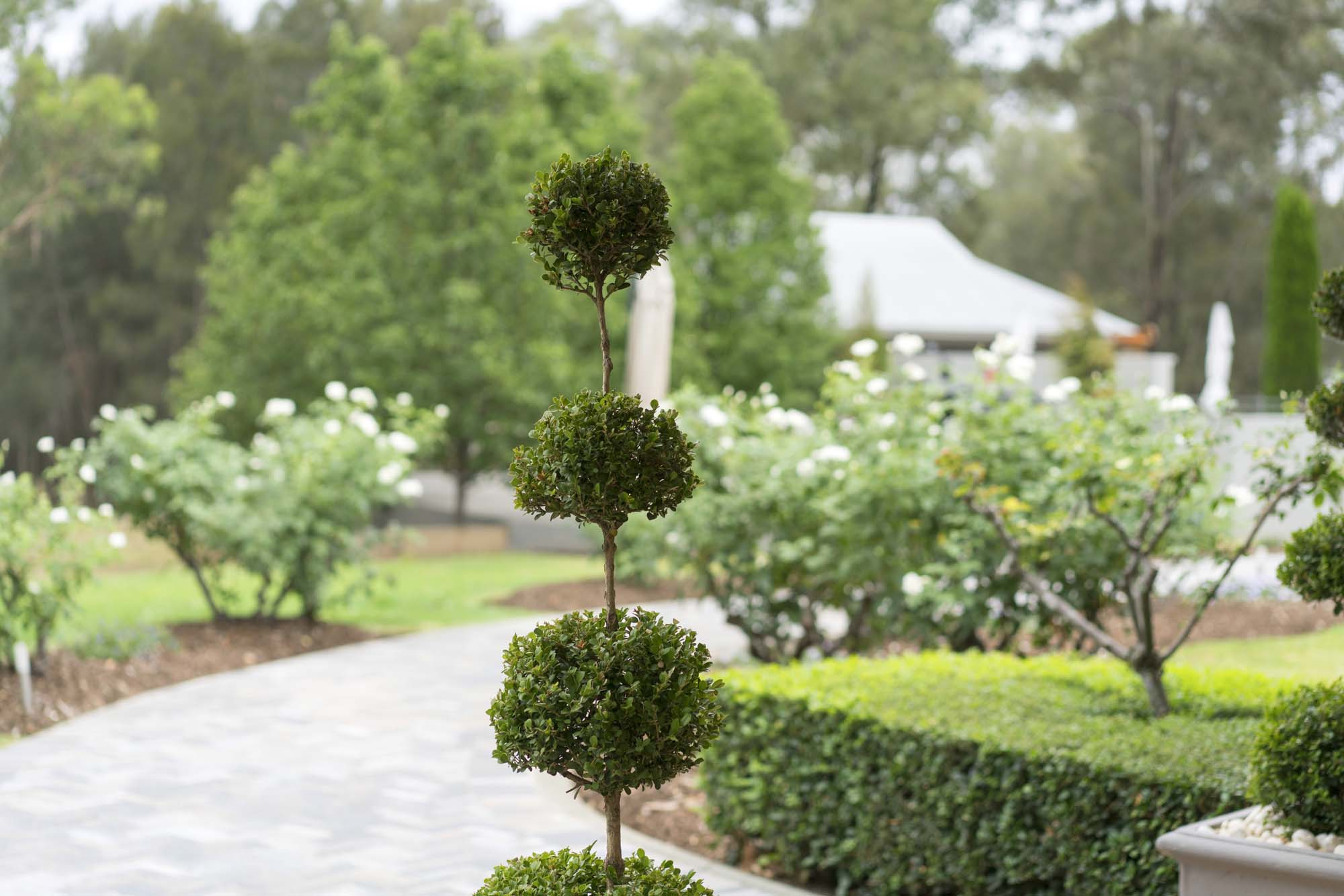 Thistle Hill Guest House - topiary and hedgerows