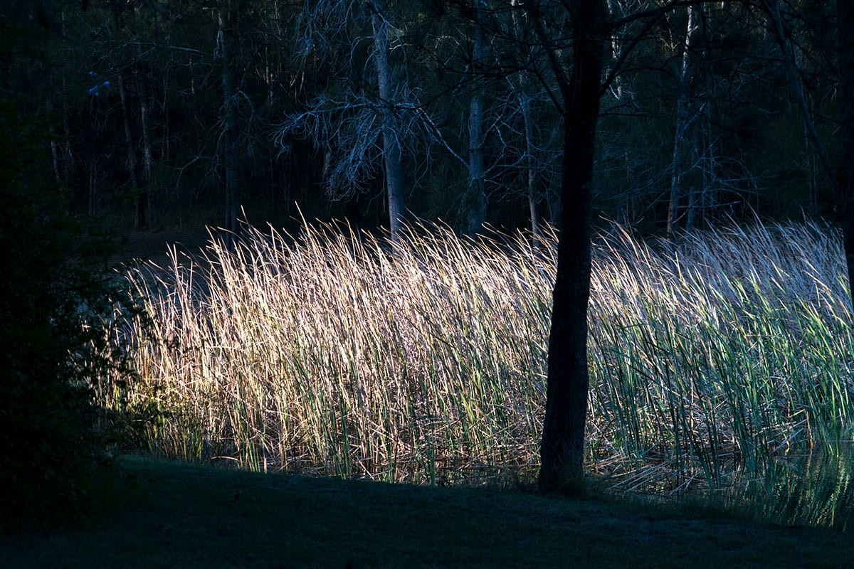Thistle Hill Guest House - reeds near the dam